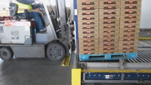 A forklift loading a pallet of strawberries on the infeed of a MACS Cooler to be precooled